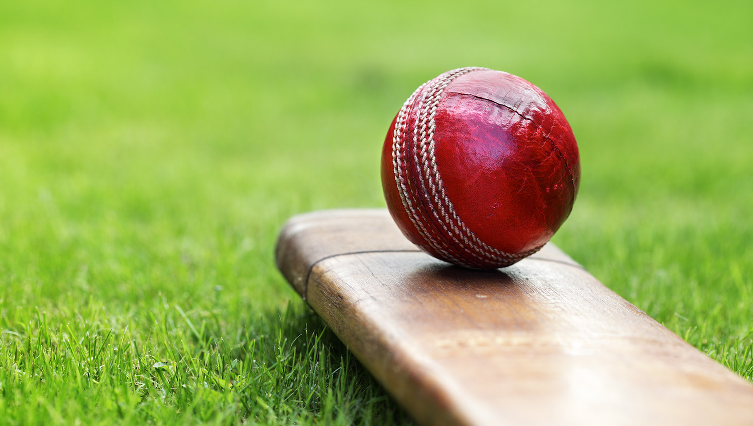 Cricket Blog Image